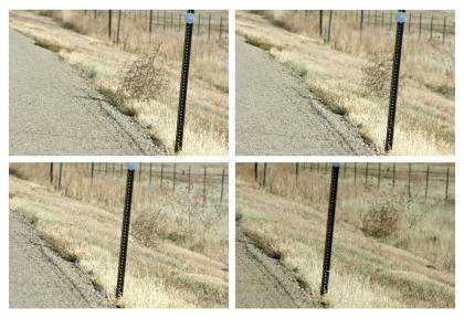 tumbleweed-life-tumble-3413823-h