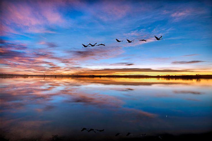 Pre-dawn_twilight_at_Bosque_del_Apache