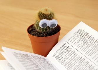 cactus-1059633_960_720.jpg